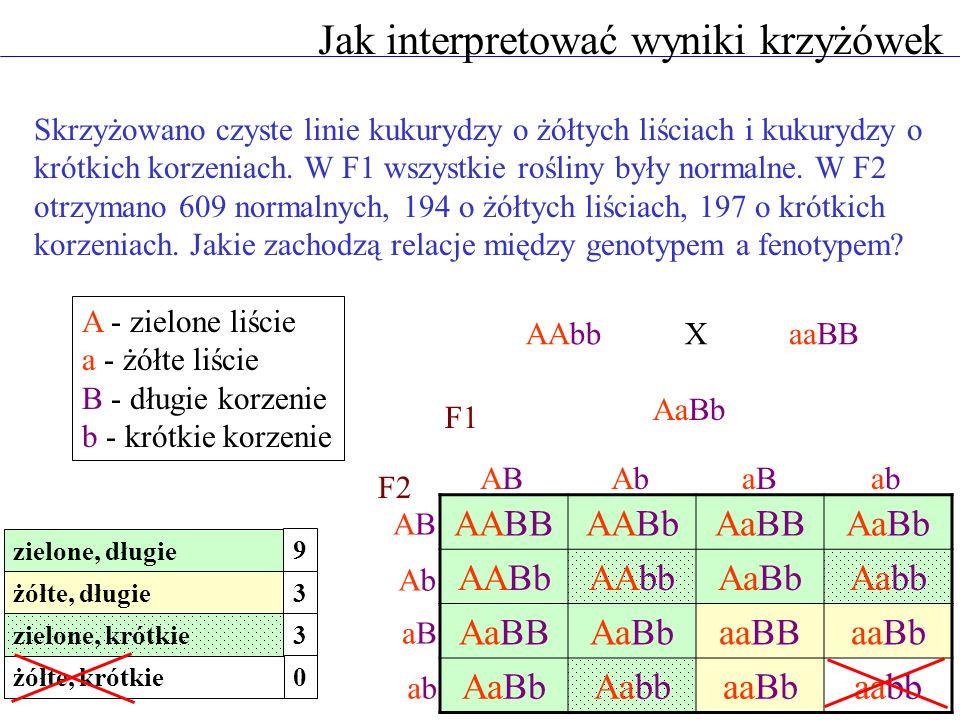 Mapowanie genów Krzyżówka trójgenowa pozwala ustalić kolejność genów dokładniejszy wynik mapowania ABC/ABCabc/abc ABC/abc abc/abc abc1779 ABC1654 Abc252 aBC241 abC131 ABc118 AbC13 aBc9 81,8% 11,8% 5,9% 0,5% krzyżówka testowa F1 X X A - B = 11,8% + 0,5% = 12,3 cM B - C = 5,9% + 0,5% = 6,4 cM A - C = 11,8% + 5,9% + 0,5% + 0,5% = 17,7 cM ABC 12,3 cM6,4 cM 17,7 cM rodzicielskie A - B B - C A - B - C