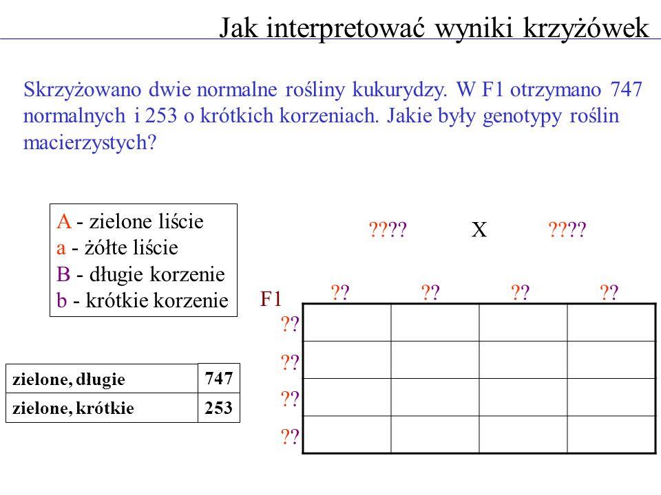 Jak interpretować wyniki krzyżówek Skrzyżowano dwie normalne rośliny kukurydzy. W F1 otrzymano 747 normalnych i 253 o krótkich korzeniach. Jakie były