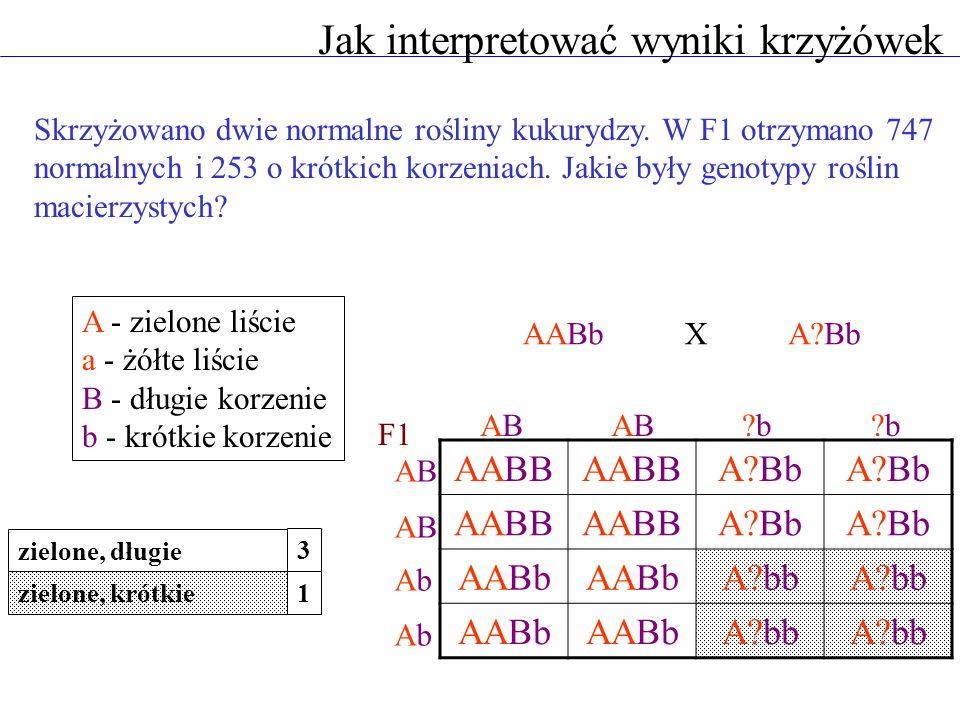 A - zielone liście a - żółte liście B - długie korzenie b - krótkie korzenie AABbA?Bb ABABABAB?b?b?b?b ABAB ABAB AbAb AbAb X F1 zielone, długie zielon