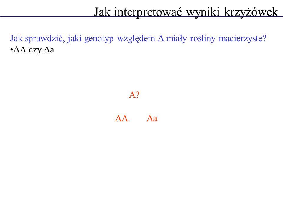 Jak interpretować wyniki krzyżówek AAaaX Aa aaX Aaaa Jak sprawdzić, jaki genotyp względem A miały rośliny macierzyste.