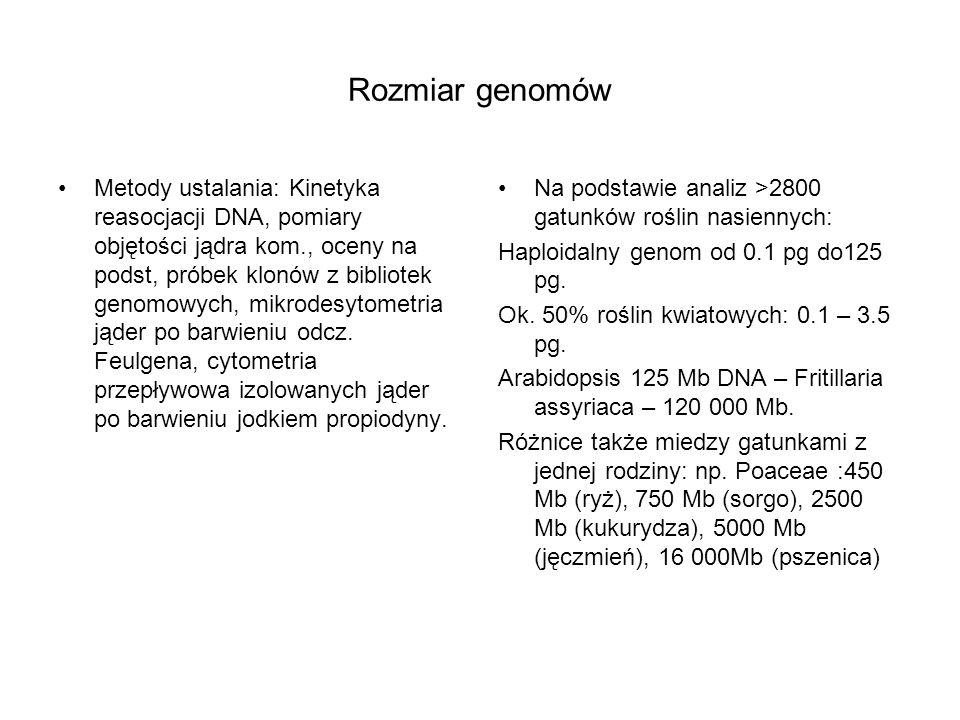 Rozmiar genomów Metody ustalania: Kinetyka reasocjacji DNA, pomiary objętości jądra kom., oceny na podst, próbek klonów z bibliotek genomowych, mikrod