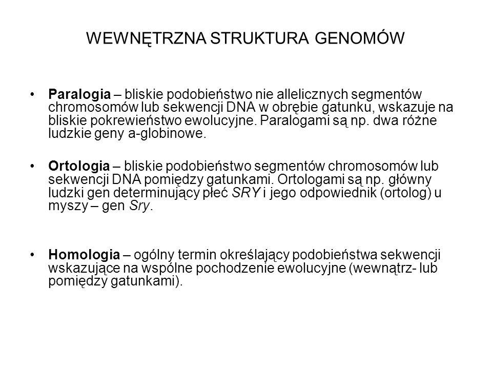 WEWNĘTRZNA STRUKTURA GENOMÓW Paralogia – bliskie podobieństwo nie allelicznych segmentów chromosomów lub sekwencji DNA w obrębie gatunku, wskazuje na