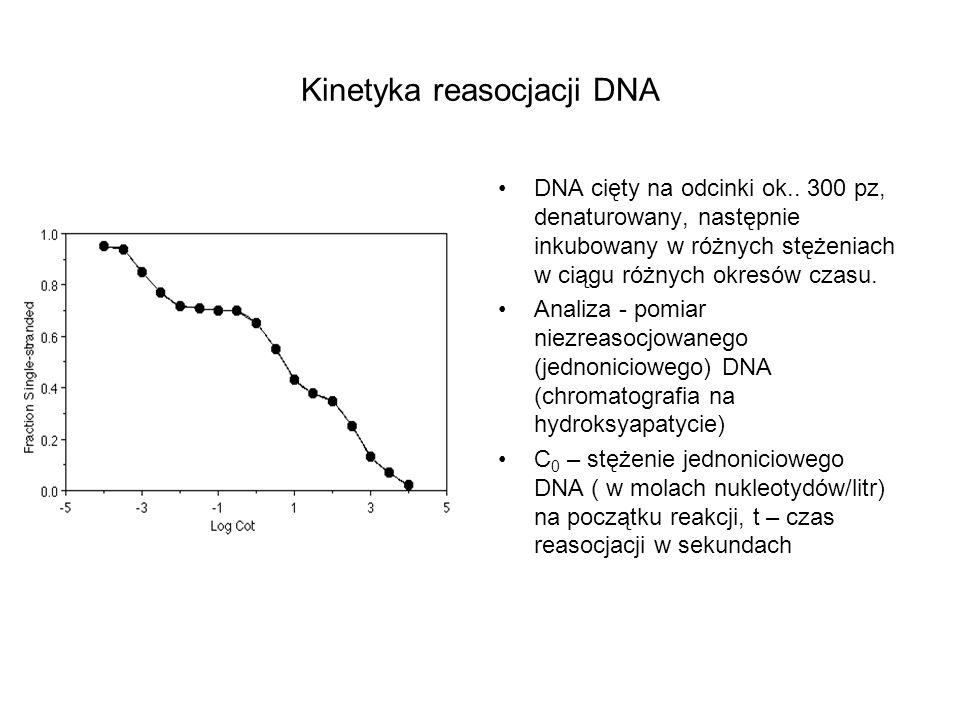 Kinetyka reasocjacji DNA DNA cięty na odcinki ok.. 300 pz, denaturowany, następnie inkubowany w różnych stężeniach w ciągu różnych okresów czasu. Anal