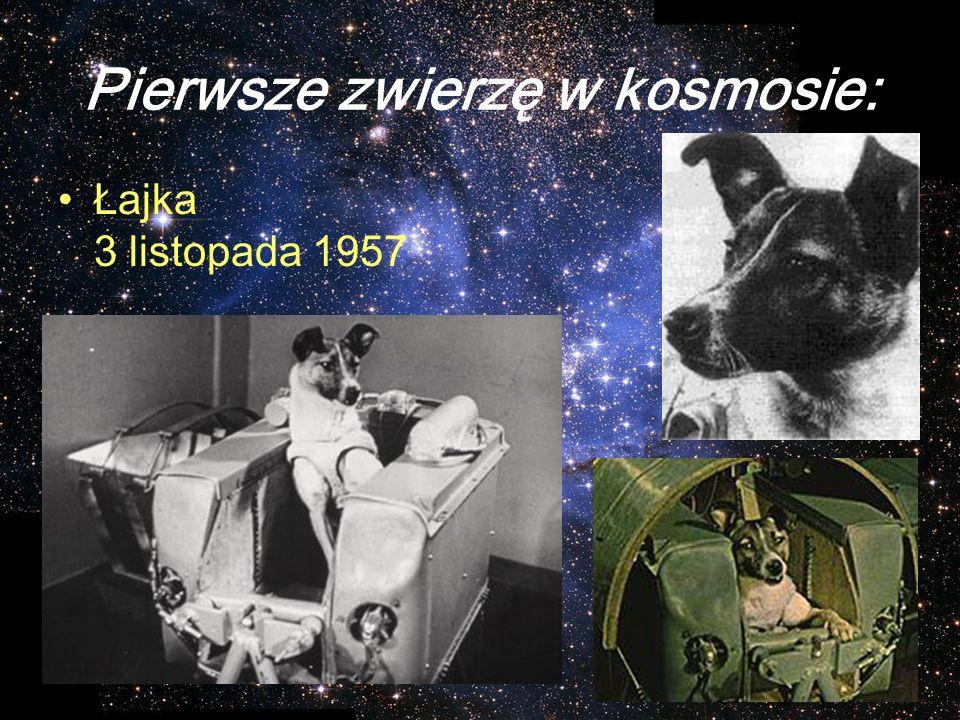 Pierwsze zwierzę w kosmosie: Łajka 3 listopada 1957