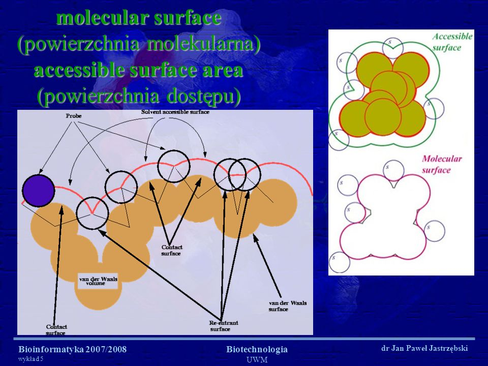 Bioinformatyka 2007/2008 wykład 5 Biotechnologia UWM dr Jan Paweł Jastrzębski molecular surface (powierzchnia molekularna) accessible surface area (po