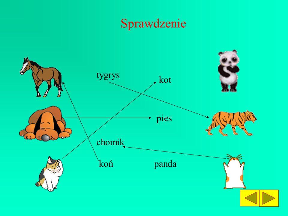 Do obrazka dobierz właściwy podpis. chomik kot koń tygrys panda pies Sprawdź, czy dobrze zrobiłeś