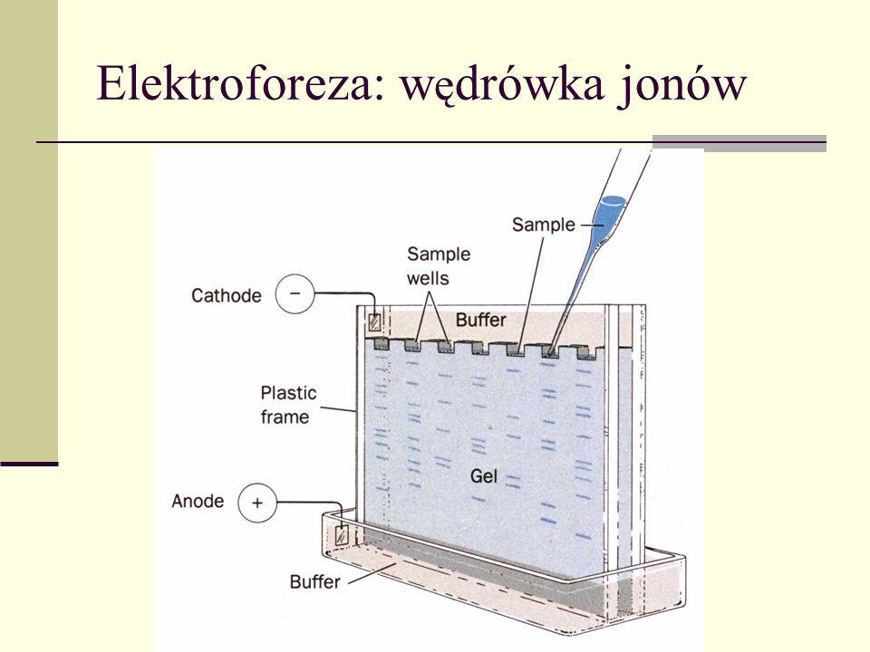 Pr ą d elektryczny = ruch ładunku Natężenie prądu (przez wybraną powierzchnię): ładunek przepływający na jednostkę czasu I = dQ/dt Nośniki prądu: elektrony, jony, dziury Jednostka: amperA = C/s Amperomierz Włączany szeregowo Rzędy wielkości: Elektrostatyka 1 A Żarówka 1 A Rozrusznik 100 A I
