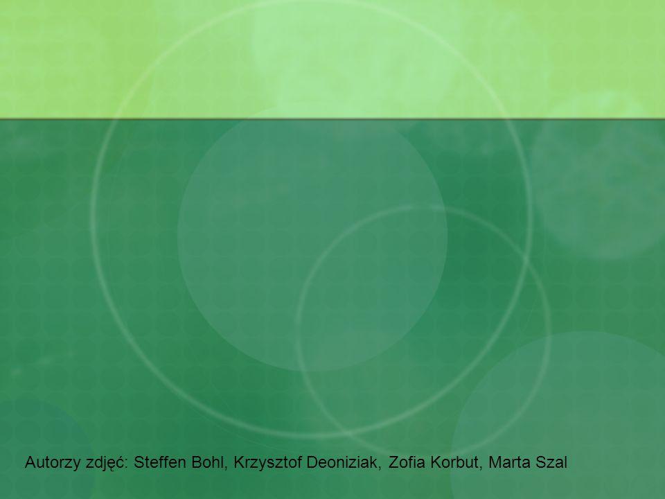Autorzy zdjęć: Steffen Bohl, Krzysztof Deoniziak, Zofia Korbut, Marta Szal