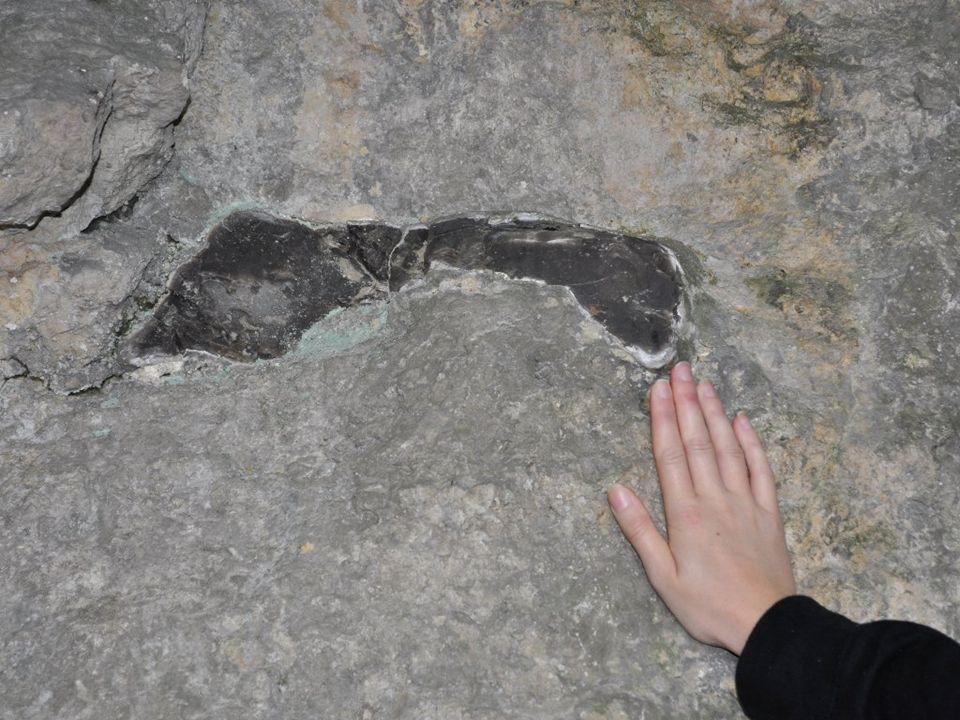 Do najpopularniejszych skał krzemionkowych należą krzemienie - skały osadowe zbudowane gł. z kryptokrystalicznej odmiany kwarcu lub chalcedonu i tworz