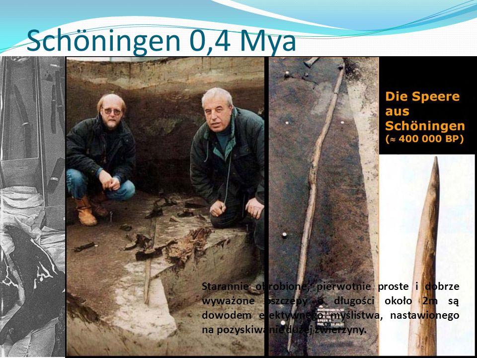 Schöningen 0,4 Mya Starannie obrobione, pierwotnie proste i dobrze wyważone oszczepy o długości około 2m są dowodem efektywnego myślistwa, nastawionego na pozyskiwanie dużej zwierzyny.