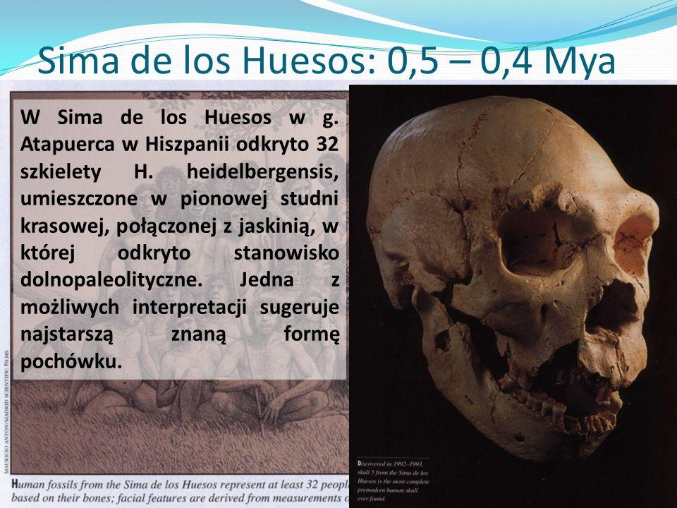 Sima de los Huesos: 0,5 – 0,4 Mya W Sima de los Huesos w g.