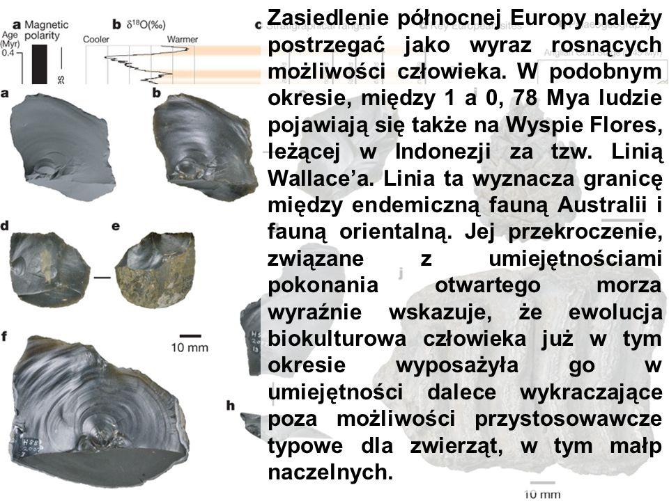 Happisburgh 0,95 Mya Odkrycie, że zasiedlenie północnej części Europy dokonało się tak wcześnie świadczy o dużych zdolnościach adaptacyjnych H.antecessor.