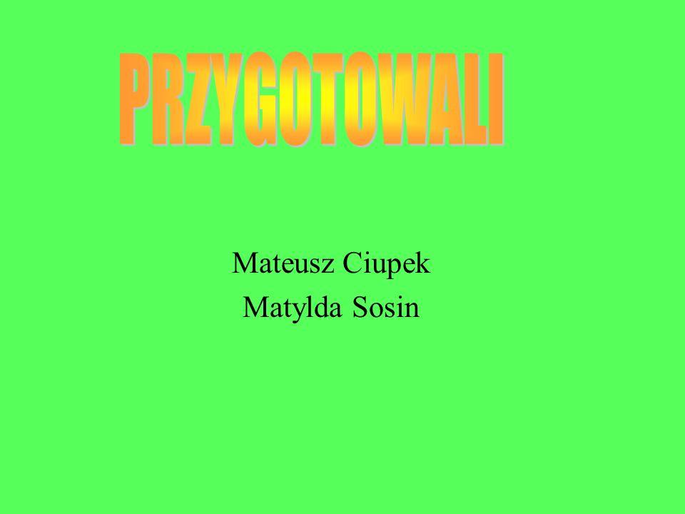 Mateusz Ciupek Matylda Sosin