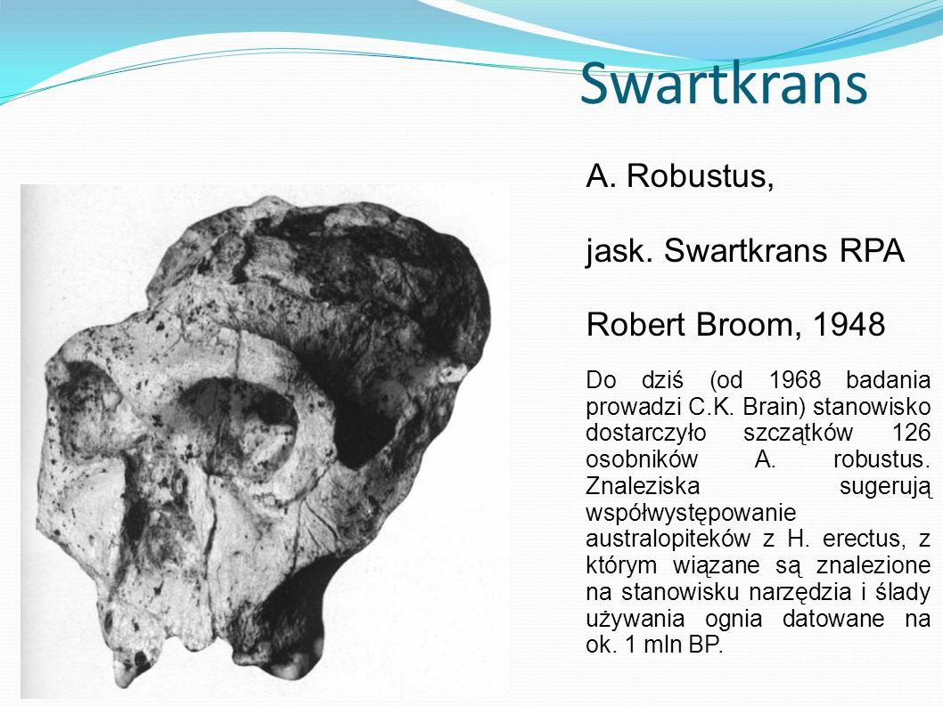 Swartkrans A. Robustus, jask. Swartkrans RPA Robert Broom, 1948 Do dziś (od 1968 badania prowadzi C.K. Brain) stanowisko dostarczyło szczątków 126 oso