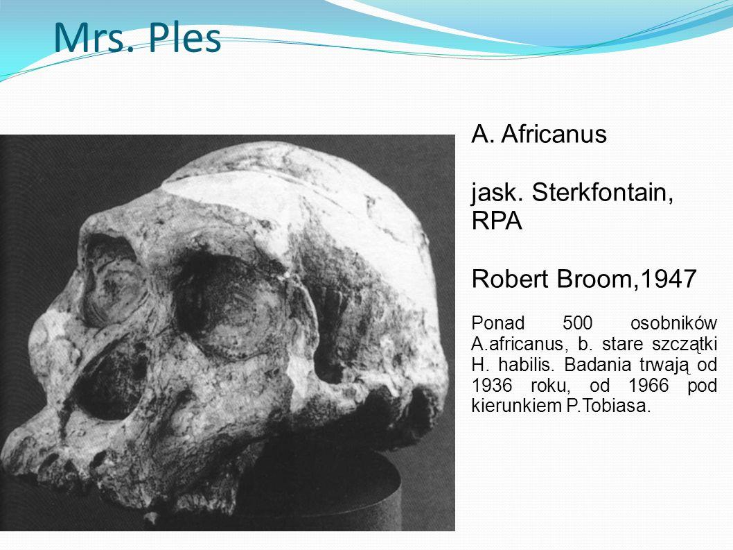 Mrs. Ples A. Africanus jask. Sterkfontain, RPA Robert Broom,1947 Ponad 500 osobników A.africanus, b. stare szczątki H. habilis. Badania trwają od 1936