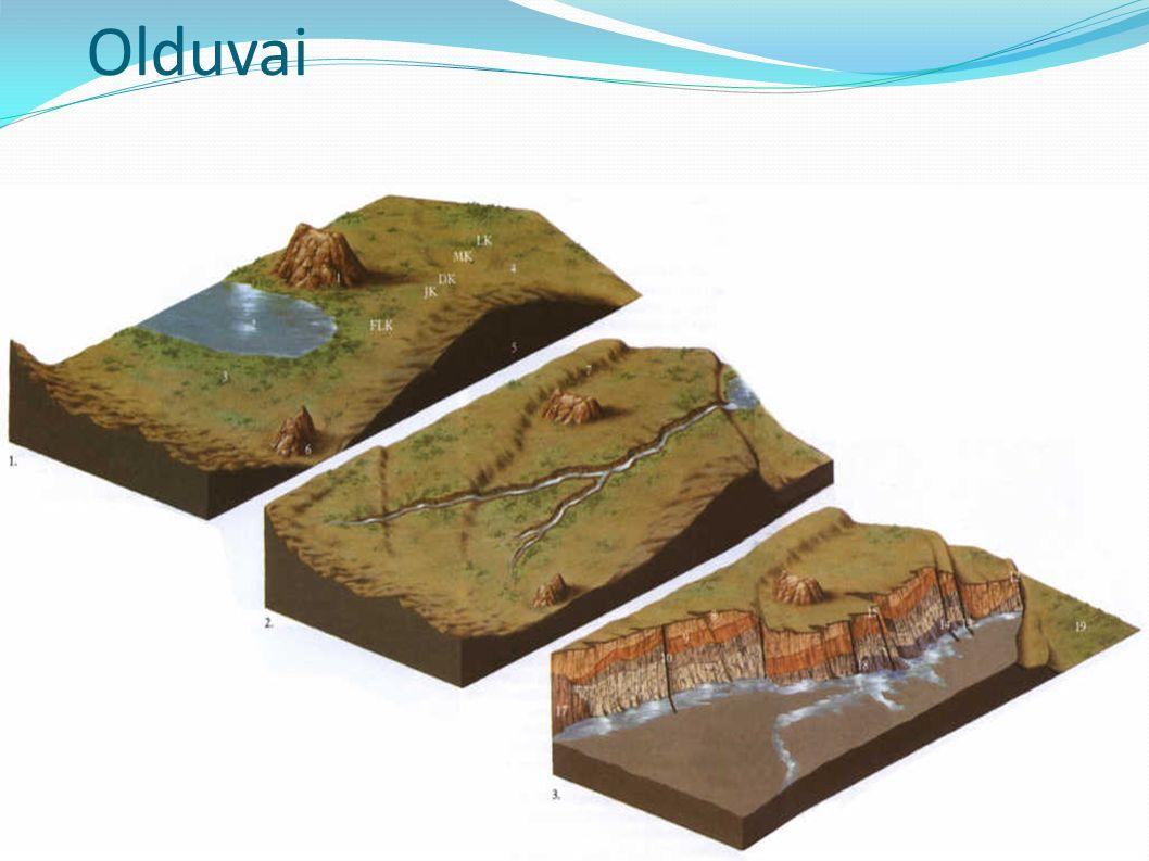 Olduvai H. habilis, A.boisei Olduvai Gorge, Tanzania Louis Leakey, 1956 Zespół 5 stanowisk w wąwozie erozyjnym, przecinającym sedymenty związane ze st