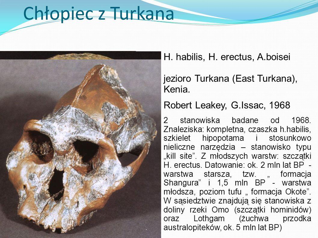 Chłopiec z Turkana H. habilis, H. erectus, A.boisei jezioro Turkana (East Turkana), Kenia. Robert Leakey, G.Issac, 1968 2 stanowiska badane od 1968. Z
