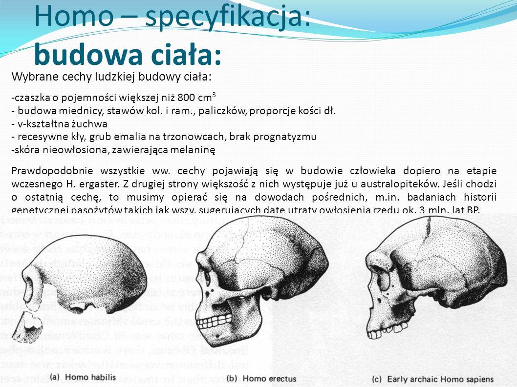 Homo – specyfikacja: budowa ciała: Wybrane cechy ludzkiej budowy ciała: -czaszka o pojemności większej niż 800 cm 3 - budowa miednicy, stawów kol. i r