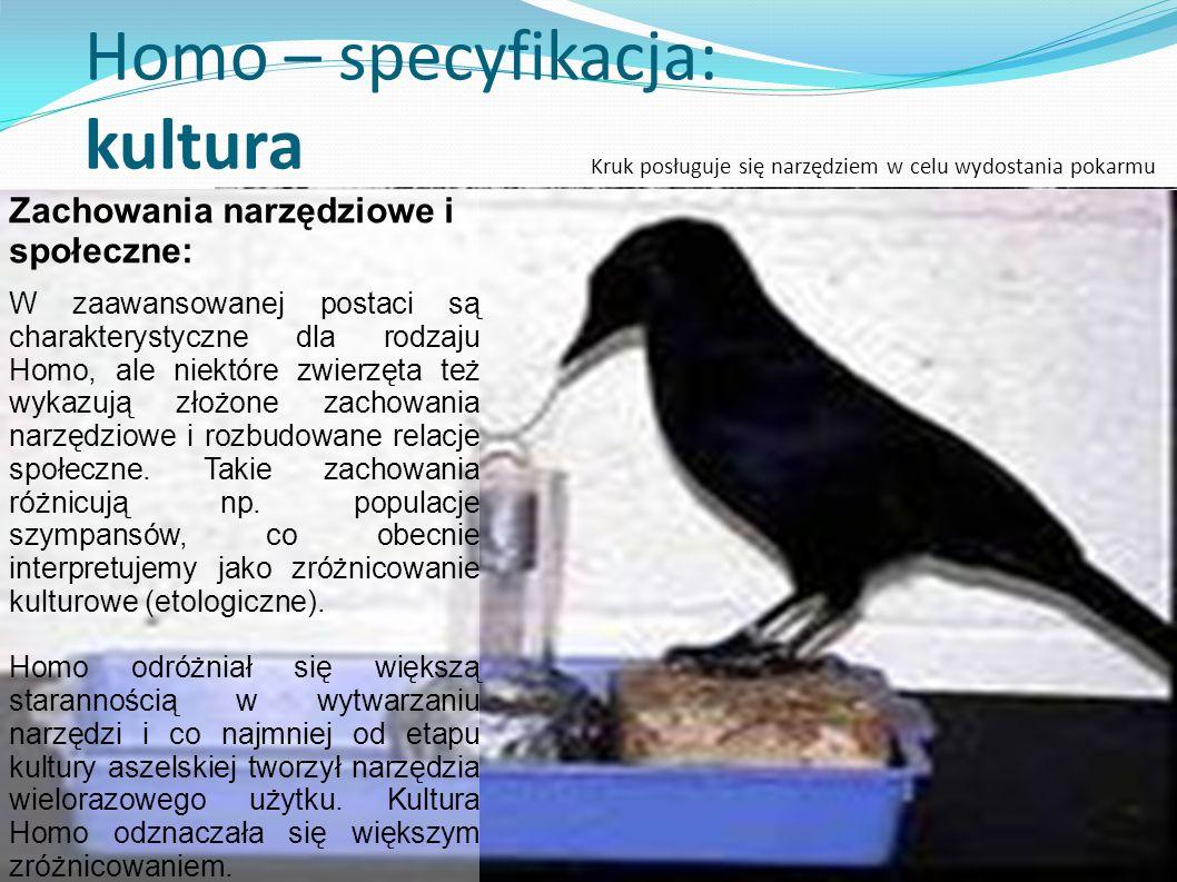 Homo – specyfikacja: kultura Zachowania narzędziowe i społeczne: W zaawansowanej postaci są charakterystyczne dla rodzaju Homo, ale niektóre zwierzęta też wykazują złożone zachowania narzędziowe i rozbudowane relacje społeczne.