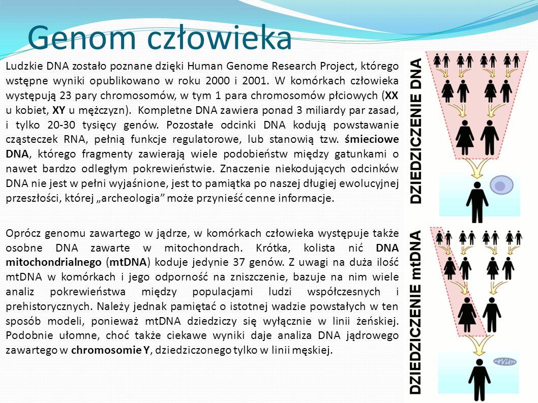 Genom człowieka Ludzkie DNA zostało poznane dzięki Human Genome Research Project, którego wstępne wyniki opublikowano w roku 2000 i 2001. W komórkach