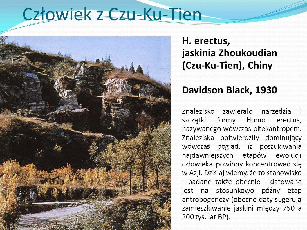 Człowiek z Czu-Ku-Tien H. erectus, jaskinia Zhoukoudian (Czu-Ku-Tien), Chiny Davidson Black, 1930 Znalezisko zawierało narzędzia i szczątki formy Homo