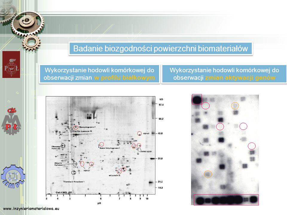 www.inzynieriamaterialowa.eu Badanie biozgodności powierzchni biomateriałów Wykorzystanie hodowli komórkowej do obserwacji zmian w profilu białkowym W