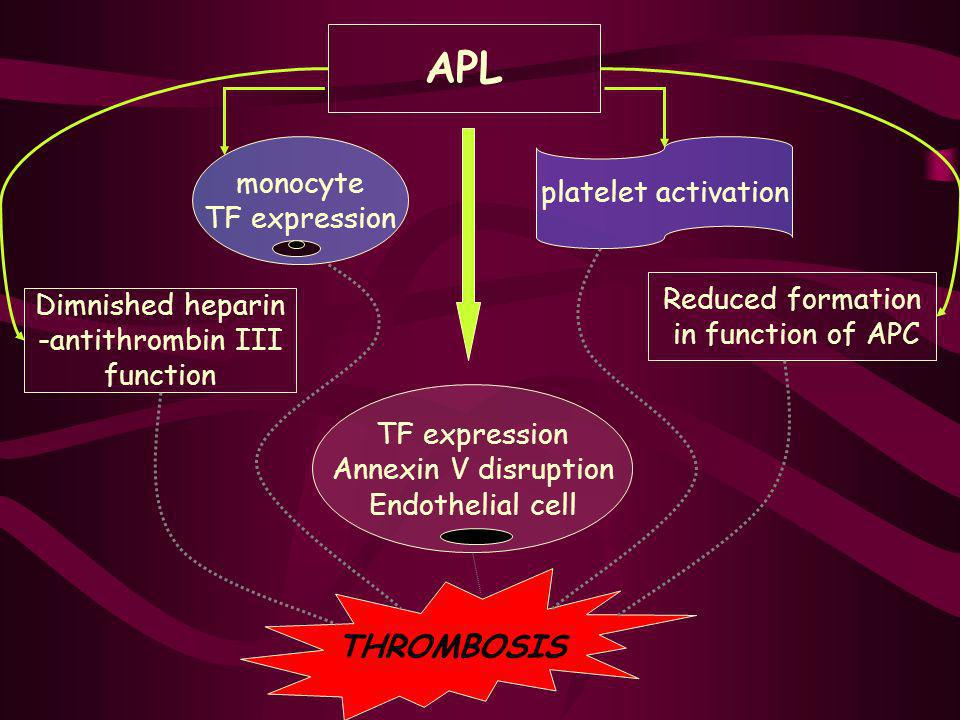 APL monocyte TF expression platelet activation Reduced formation in function of APC TF expression Annexin V disruption Endothelial cell Dimnished hepa