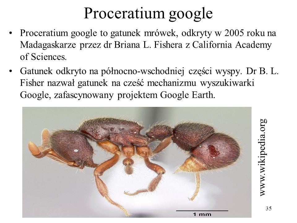 35 Proceratium google Proceratium google to gatunek mrówek, odkryty w 2005 roku na Madagaskarze przez dr Briana L. Fishera z California Academy of Sci