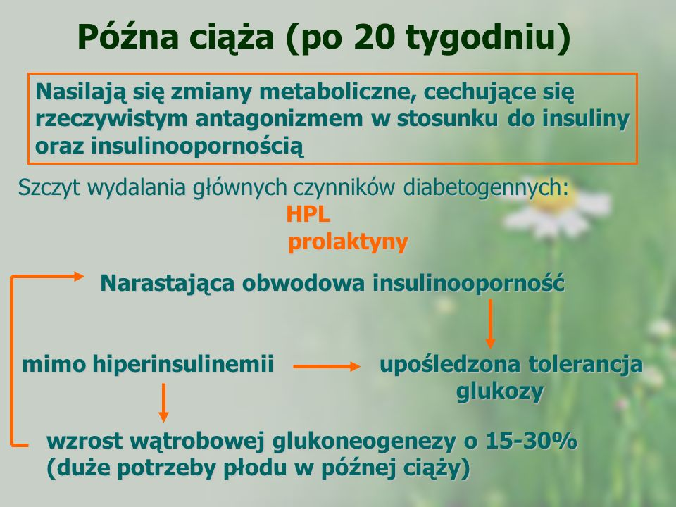 Późna ciąża (po 20 tygodniu) Nasilają się zmiany metaboliczne, cechujące się rzeczywistym antagonizmem w stosunku do insuliny oraz insulinoopornością