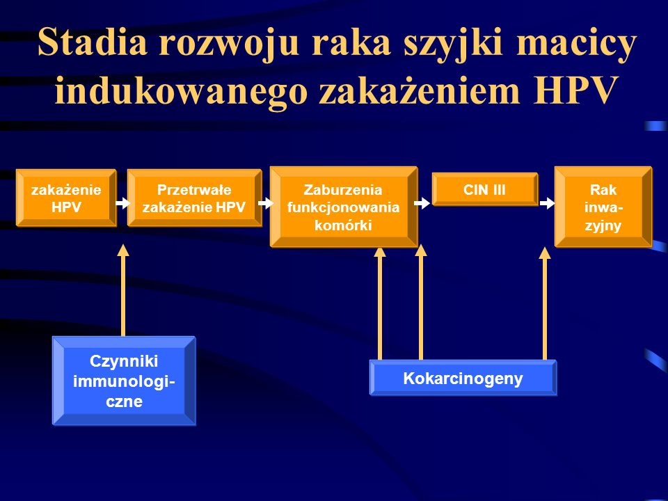 Stadia rozwoju raka szyjki macicy indukowanego zakażeniem HPV zakażenie HPV Przetrwałe zakażenie HPV Zaburzenia funkcjonowania komórki CIN III Rak inwa- zyjny Czynniki immunologi- czne Kokarcinogeny