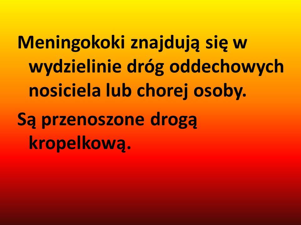 Meningokoki znajdują się w wydzielinie dróg oddechowych nosiciela lub chorej osoby.