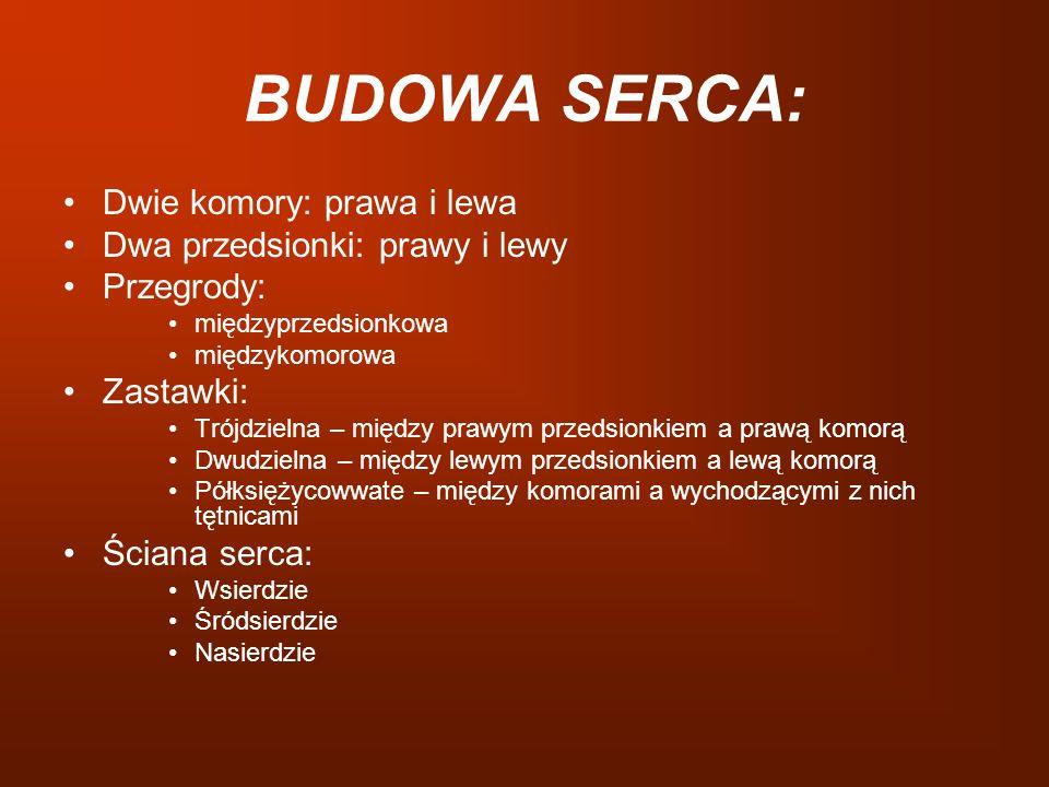 BUDOWA SERCA: Dwie komory: prawa i lewa Dwa przedsionki: prawy i lewy Przegrody: międzyprzedsionkowa międzykomorowa Zastawki: Trójdzielna – między pra