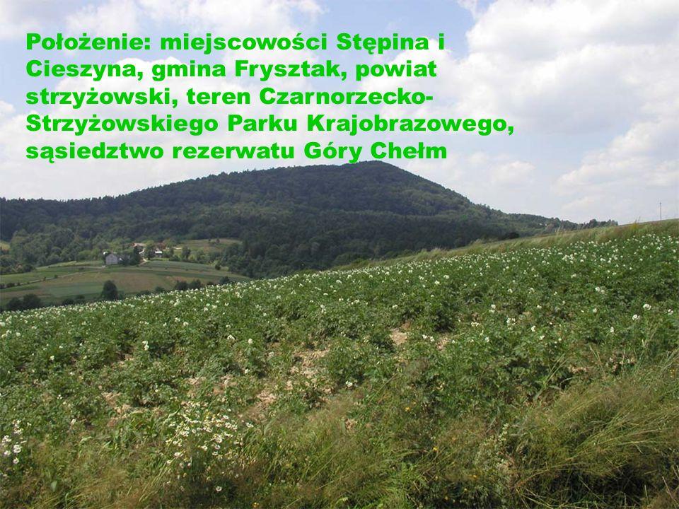 Położenie: miejscowości Stępina i Cieszyna, gmina Frysztak, powiat strzyżowski, teren Czarnorzecko- Strzyżowskiego Parku Krajobrazowego, sąsiedztwo rezerwatu Góry Chełm
