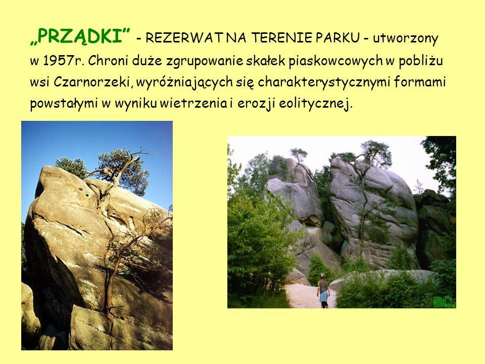 REZERWATY PRZYRODY Rezerwat to obszar obejmujący zachowane w stanie naturalnym lub mało zmienionym ekosystemy, określone gatunki roślin i zwierząt, el