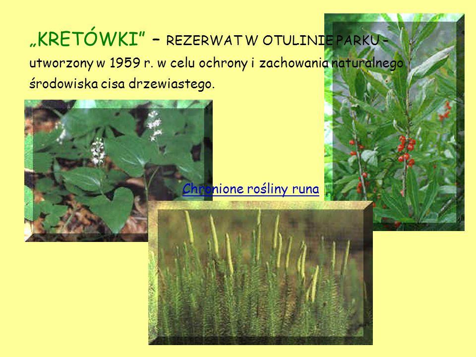 REZERWAT HERBY – położony w przełomowej dolinie Wisłoka, na północ od miejscowości Frysztak.
