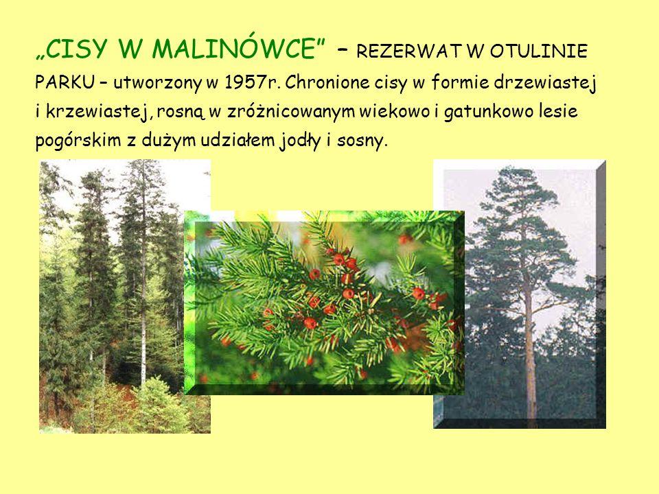 KRETÓWKI – REZERWAT W OTULINIE PARKU – utworzony w 1959 r. w celu ochrony i zachowania naturalnego środowiska cisa drzewiastego. Chronione rośliny run
