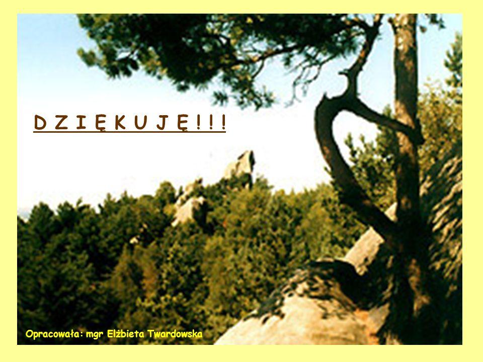CISY W MALINÓWCE – REZERWAT W OTULINIE PARKU – utworzony w 1957r. Chronione cisy w formie drzewiastej i krzewiastej, rosną w zróżnicowanym wiekowo i g