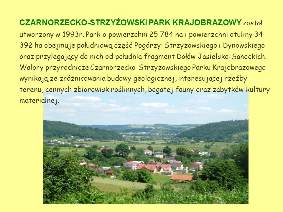 CZARNORZECKO-STRZYŻOWSKI PARK KRAJOBRAZOWY został utworzony w 1993r.