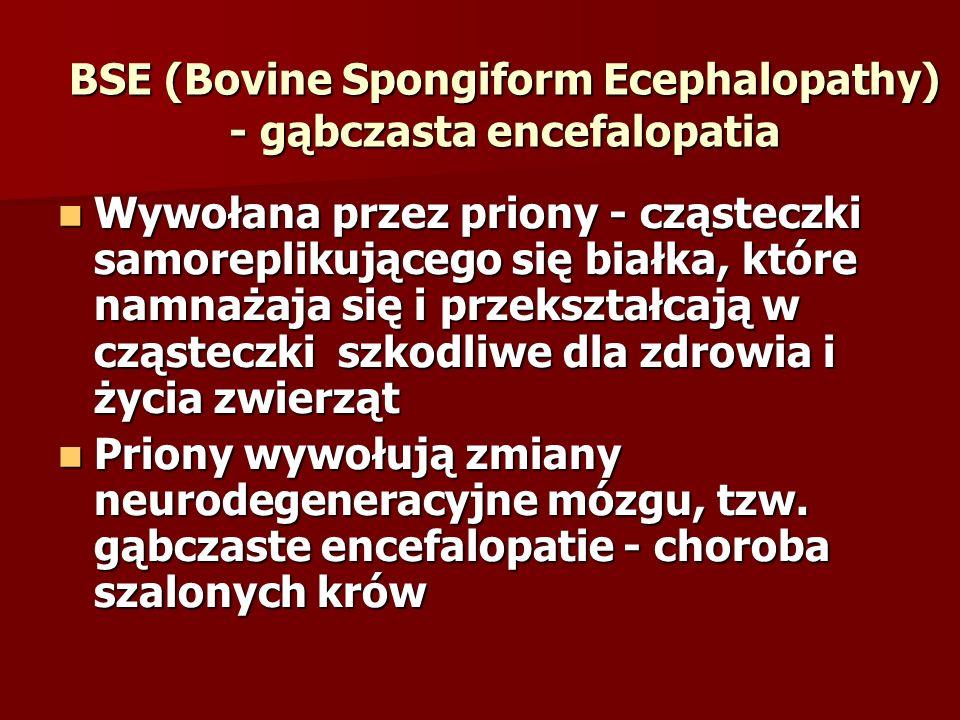 BSE (Bovine Spongiform Ecephalopathy) - gąbczasta encefalopatia Wywołana przez priony - cząsteczki samoreplikującego się białka, które namnażaja się i przekształcają w cząsteczki szkodliwe dla zdrowia i życia zwierząt Wywołana przez priony - cząsteczki samoreplikującego się białka, które namnażaja się i przekształcają w cząsteczki szkodliwe dla zdrowia i życia zwierząt Priony wywołują zmiany neurodegeneracyjne mózgu, tzw.