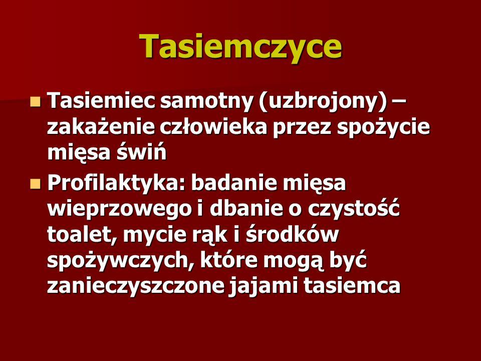 Tasiemczyce Tasiemiec samotny (uzbrojony) – zakażenie człowieka przez spożycie mięsa świń Tasiemiec samotny (uzbrojony) – zakażenie człowieka przez sp