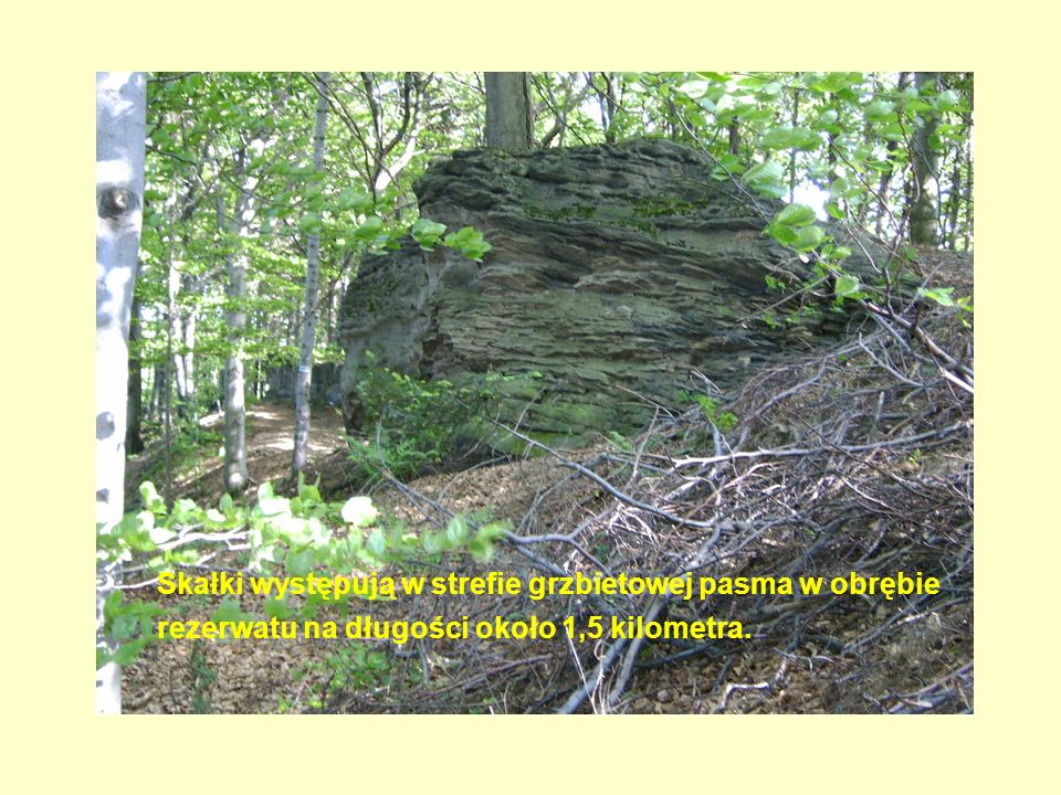 Skałki występują w strefie grzbietowej pasma w obrębie rezerwatu na długości około 1,5 kilometra.