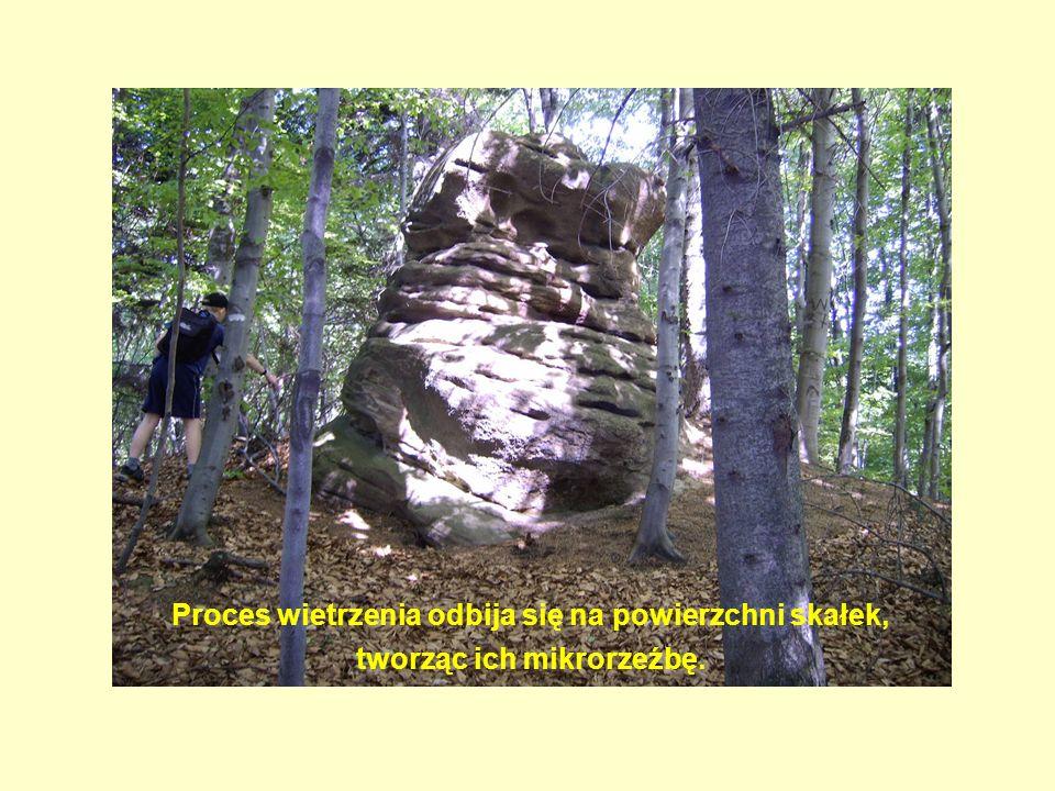 Proces wietrzenia odbija się na powierzchni skałek, tworząc ich mikrorzeźbę.
