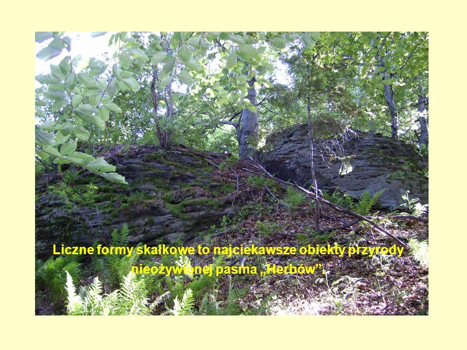 Liczne formy skałkowe to najciekawsze obiekty przyrody nieożywionej pasma Herbów.