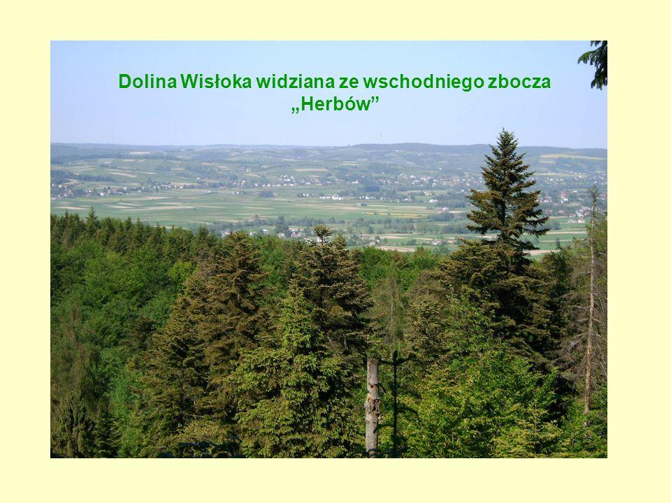 Dolina Wisłoka widziana ze wschodniego zbocza Herbów