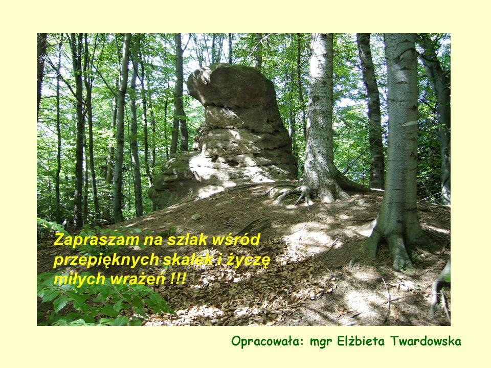Opracowała: mgr Elżbieta Twardowska Zapraszam na szlak wśród przepięknych skałek i życzę miłych wrażeń !!!
