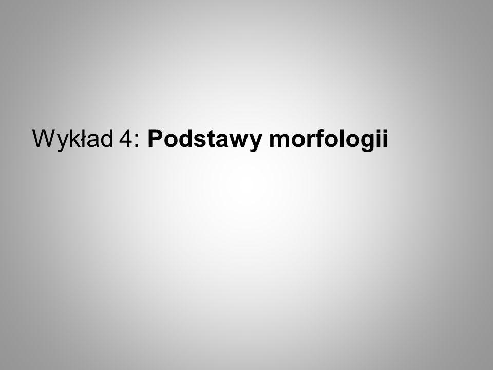 Wykład 4: Podstawy morfologii