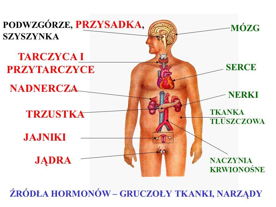 CZY HORMONY SĄ NIEZBĘDNE DLA ŻYCIA .