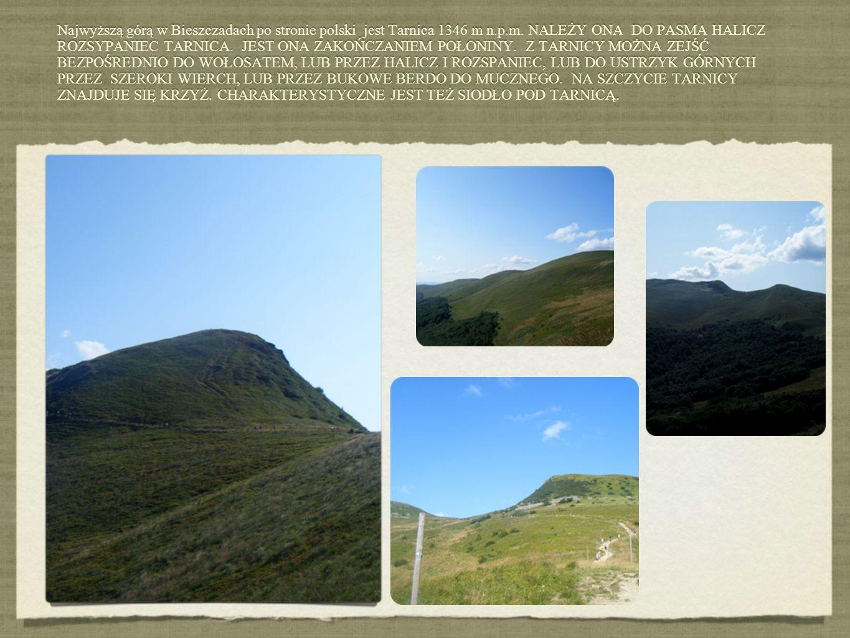 Najwyższą górą w Bieszczadach po stronie polski jest Tarnica 1346 m n.p.m. NALEŻY ONA DO PASMA HALICZ ROZSYPANIEC TARNICA. JEST ONA ZAKOŃCZANIEM POŁON