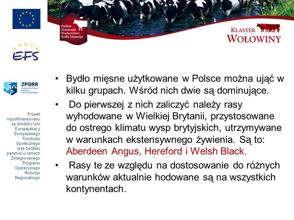 Projekt współfinansowany ze środków Unii Europejskiej z Europejskiego Funduszu Społecznego oraz budżetu państwa w ramach Zintegrowanego Programu Operacyjnego Rozwoju Regionalnego Bydło mięsne użytkowane w Polsce można ująć w kilku grupach.