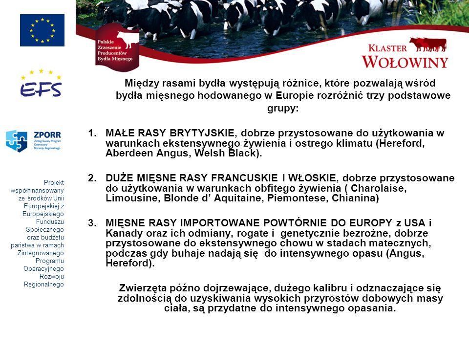 Projekt współfinansowany ze środków Unii Europejskiej z Europejskiego Funduszu Społecznego oraz budżetu państwa w ramach Zintegrowanego Programu Operacyjnego Rozwoju Regionalnego Między rasami bydła występują różnice, które pozwalają wśród bydła mięsnego hodowanego w Europie rozróżnić trzy podstawowe grupy: 1.MAŁE RASY BRYTYJSKIE, dobrze przystosowane do użytkowania w warunkach ekstensywnego żywienia i ostrego klimatu (Hereford, Aberdeen Angus, Welsh Black).